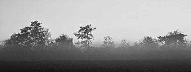 cropped-brume-et-fin-de-journc3a9e-1-sur-11.jpg
