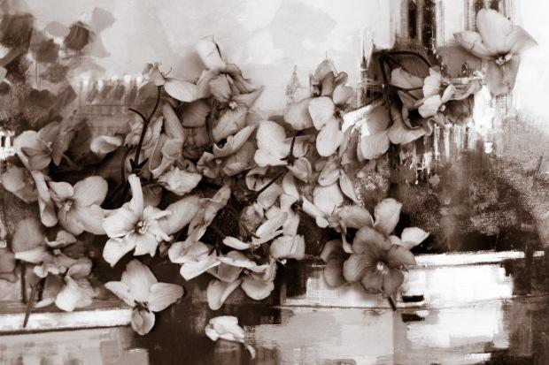 fleurs fanés (1 sur 1)